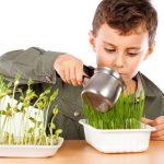 actividades con plantas para niños