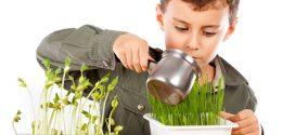 Plantas para niños; ¿Cuales son las más fáciles de cuidar?