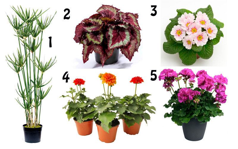 plantas de exterior faciles de mantener