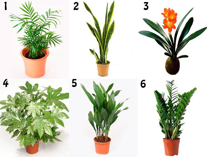 Plantas de interior faciles de cultuviar