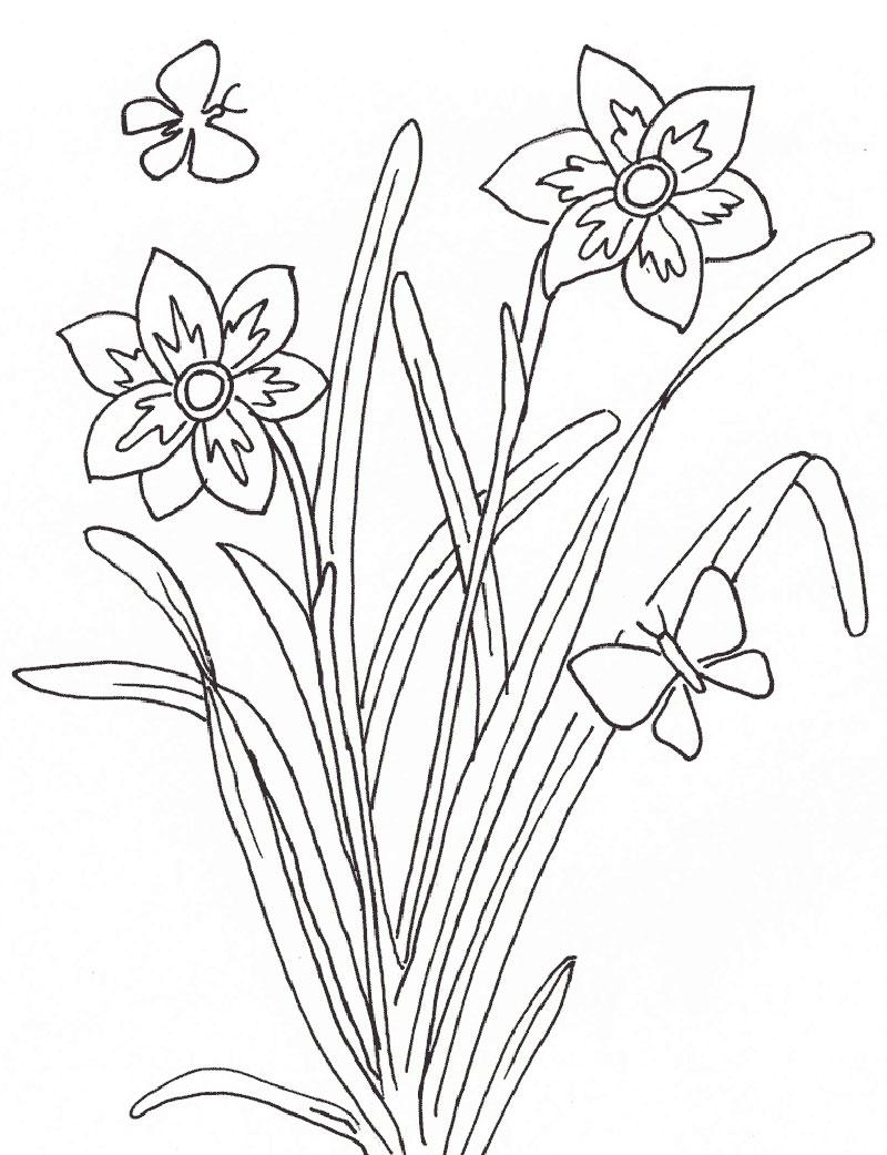 plantas alimenticias para pintar