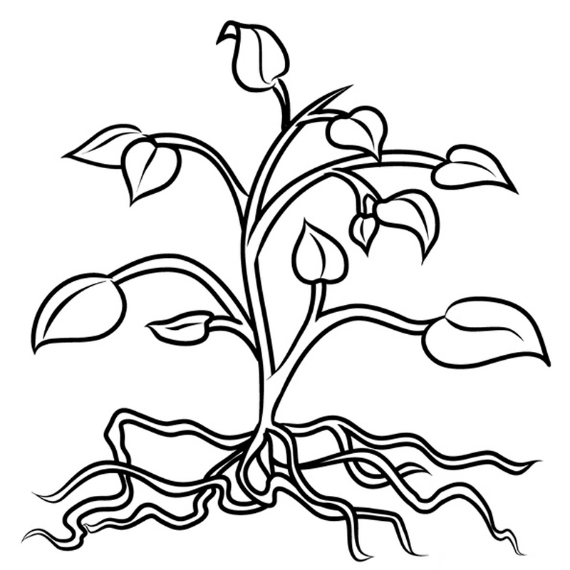 plantas carnívoras colorear