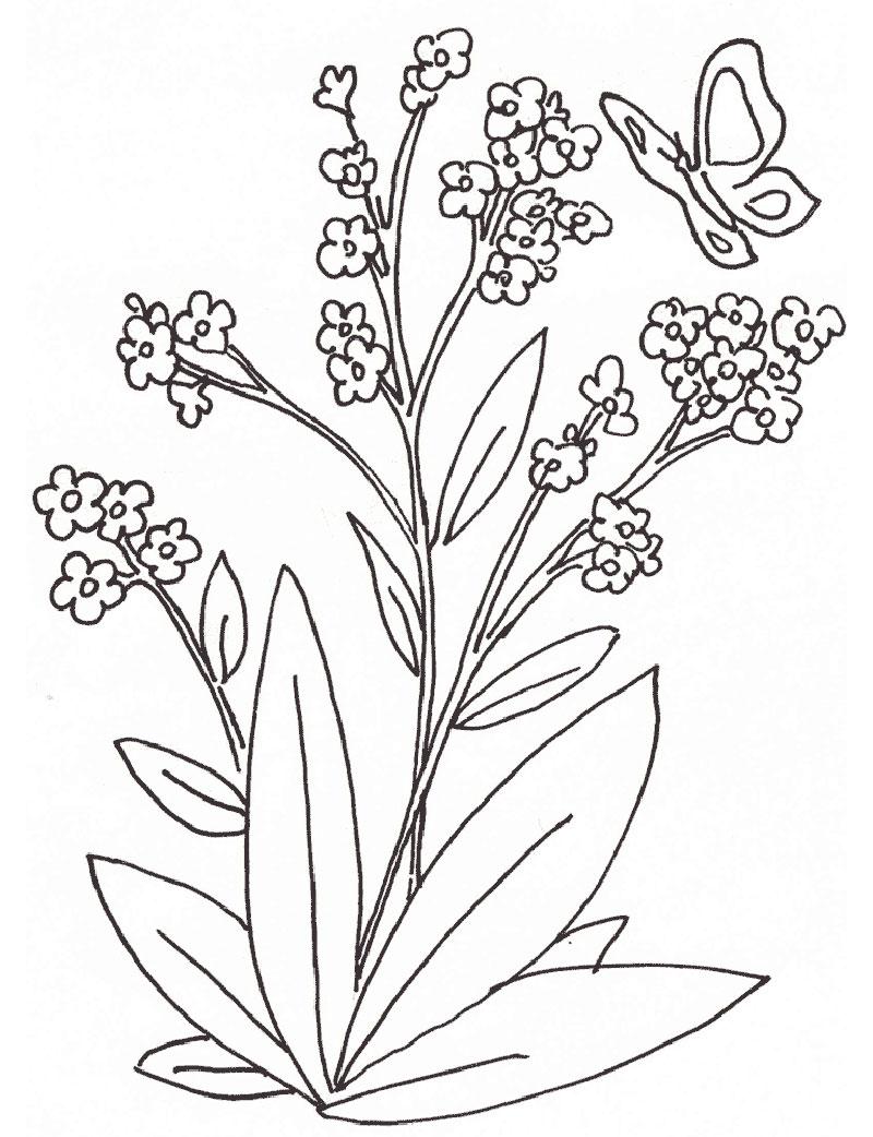 plantas que curan dibujo