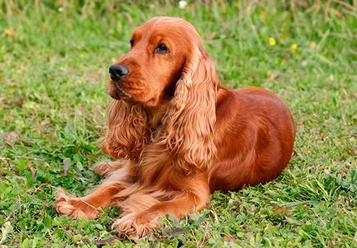 mejor perro para piso