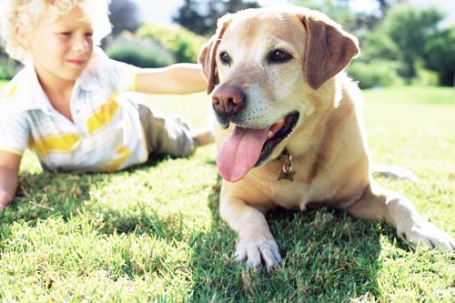 perros más cariñosos para ninos