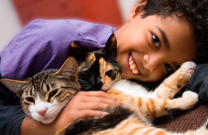 gatos cariñosos con niños