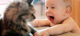 Las 10 mejores razas de gatos para niños pequeños