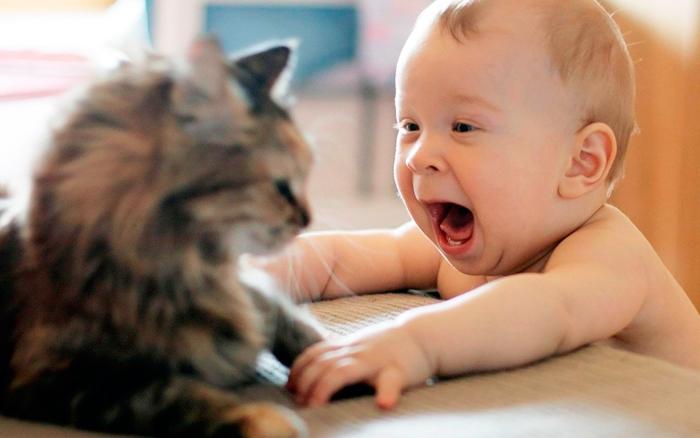 gato raza pequeña
