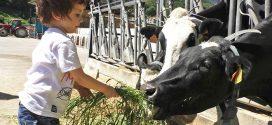 Las mejores canciones infantiles de animales de granja