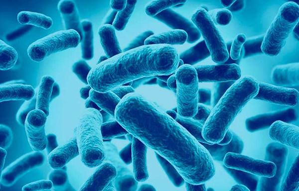 alimentos probioticos ejemplos