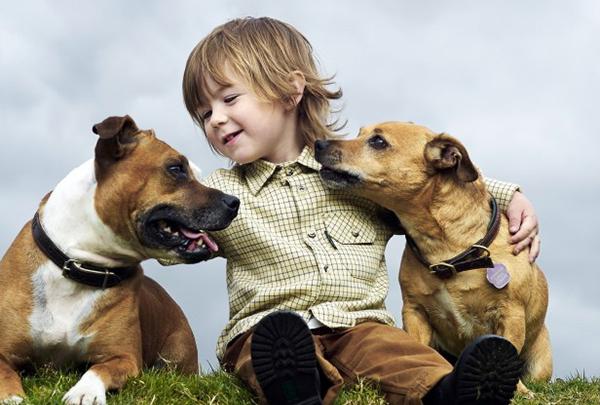 mascotas para niños