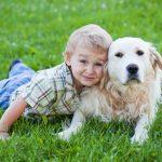 perros jugando con niños