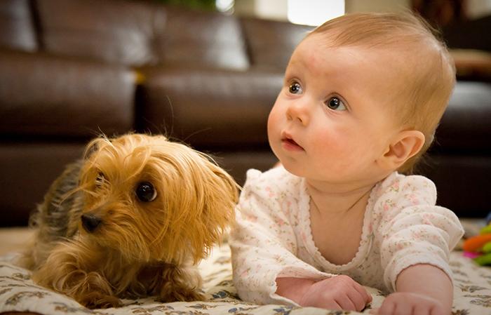 perros y niños pequeños