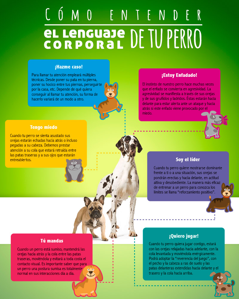 Como entender el lenguaje corporal de un perro infografia