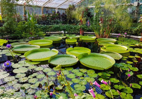 jardin botanico londres opiniones precio
