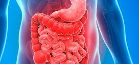 Aparato digestivo para niños; Explicado paso a paso