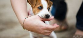 Mordedura de perro en niños; ¿cuál es el tratamiento?
