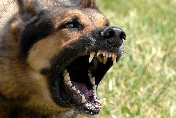 que vacuna se pone cuando te muerde un perro