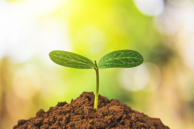 fotosintesis de las plantas primaria