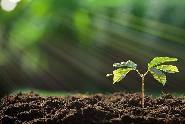 planta con fotosintesis