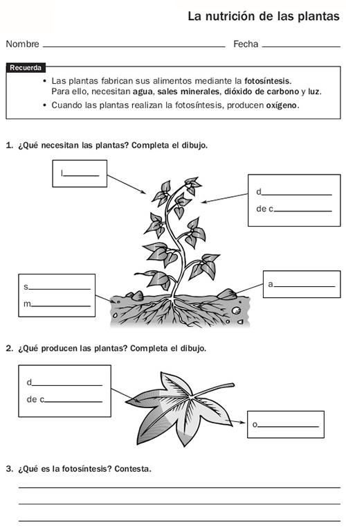 ciencias naturales 5 primaria santillana pdf