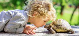 Técnica de la tortuga para niños; ¿Cómo aplicarla?