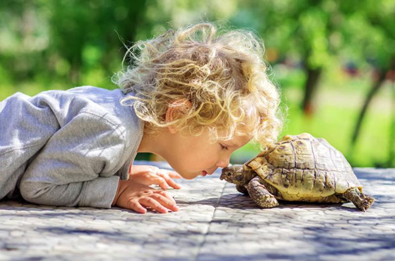 técnica de la tortuga para niños con TDAH
