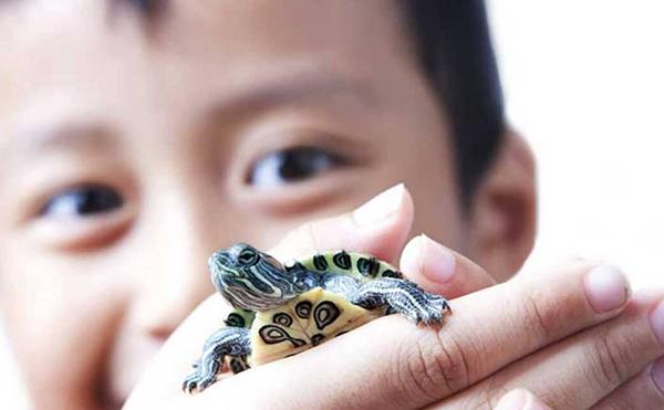 cuentos resolucion de conflictos niños