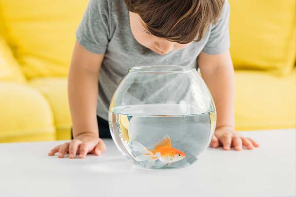 cómo elegir pez de mascota