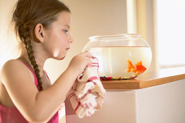como cuidar peces