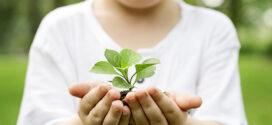 Partes de una planta para niños; ¡Con fotos y vídeos!