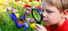 Mariposas para colorear e imprimir gratis