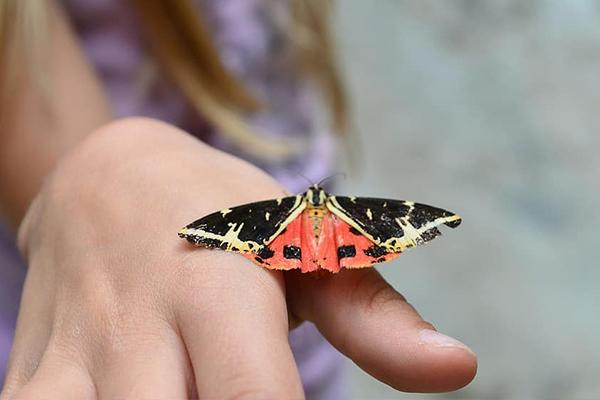 mariposa colorear infantil