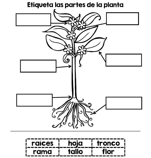 actividades para trabajar las plantas en infantil